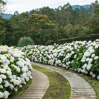 Live a unique experience in a beautiful flower farm