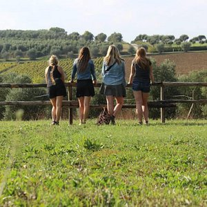 following wine roads tour