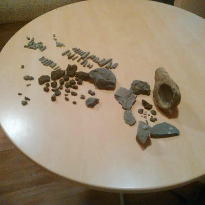 Some of the fossils we found with Paul Crossley