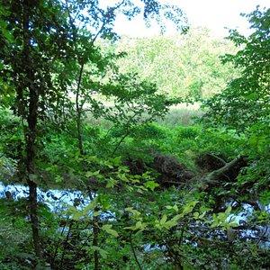 Brockadale Nature Reserve