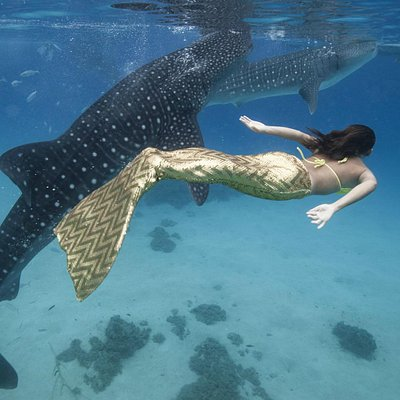 whale shark and picture