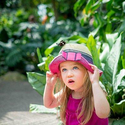 Butterfly explorer!