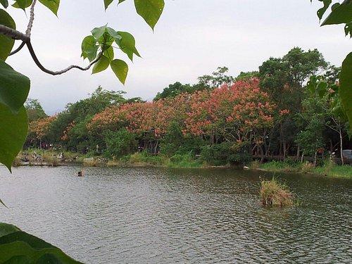 木材儲存池