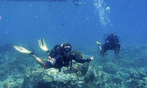 Plongée Réserve Cousteau
