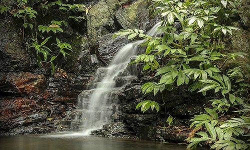 Tim Shea Falls, Scenic Walk, Bunya Mountains NP