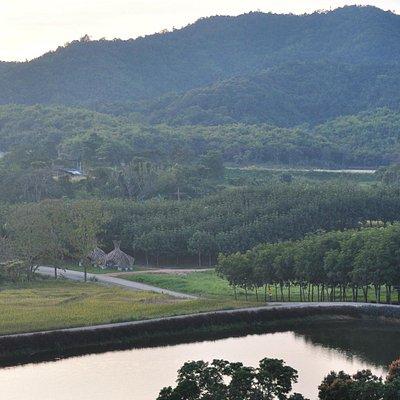 Landscape over the Tea Plantation