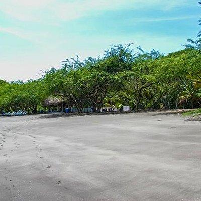 playa bongo