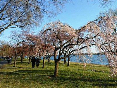 Festa das flores ao longo do Rio Potomac