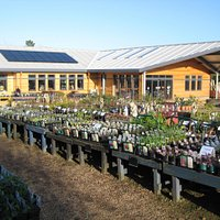Sturmer Nurseries
