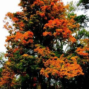 Brilliant fall folage!