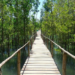 Nature Trail through the Mangrove Forest