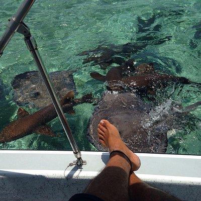 Sharks n sting rays..'