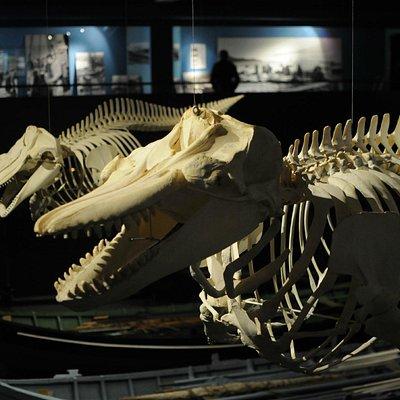 Whale Skulls (C) Lyonel Perabo