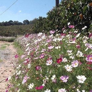 Flores embelezando a paisagem
