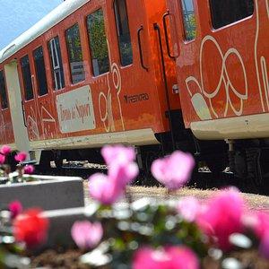 Il Treno dei Sapori - Il gusto di un viaggio che delizia ogni senso