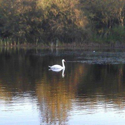 Drifting on Oakhill Lake