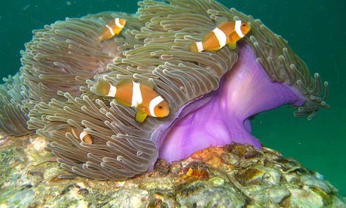 found Nemo!