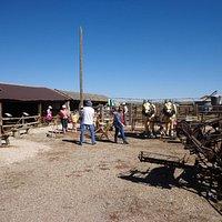 horse pulled farm equipment