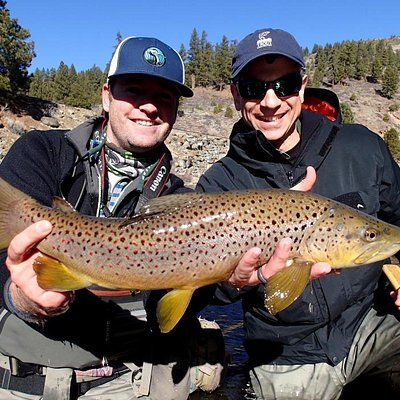 An amazing Truckee River brown!