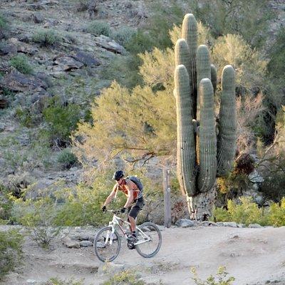 Mountain Biking on the South Mountain Trails