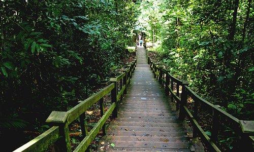 Canopy Walk Trail