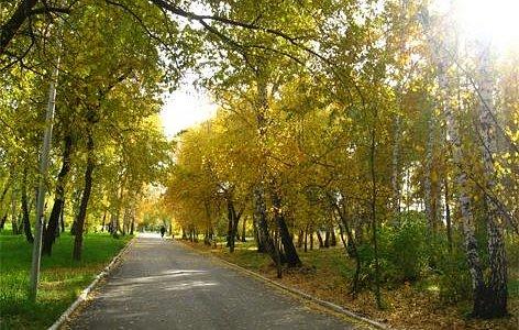"""""""Яблоневая"""" аллея осенью. А как здесь хорошо весной!"""