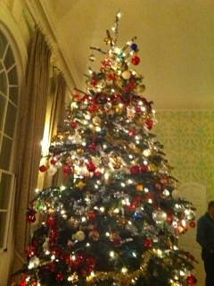 Beautiful Tree @KB_House_Garden