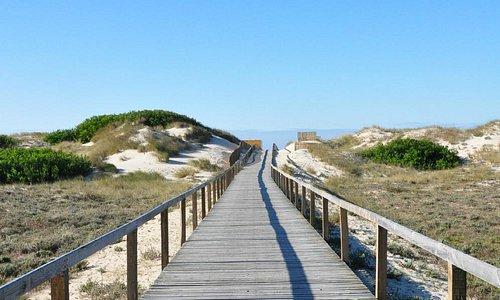 Wooden boardwalk to beach.