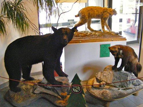 Stuffed critters on display