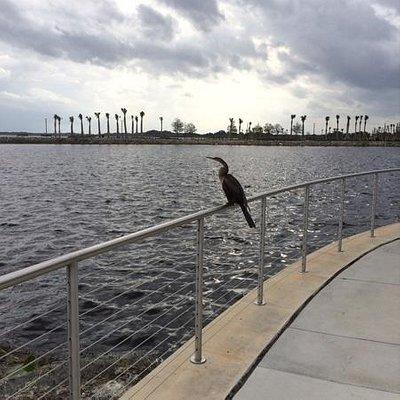 A bird admires the new surroundings!