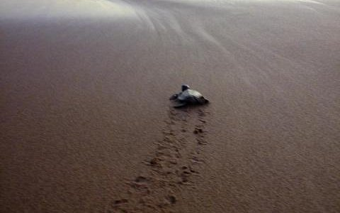 Event of turtle release
