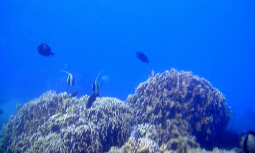 choral fishes