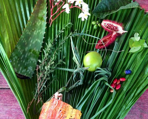 Some of the amazing species we encountered and were sent home with (cacao, sandpaper leaves, see