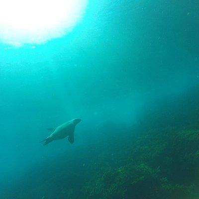 Seal Cove, Dec 2014
