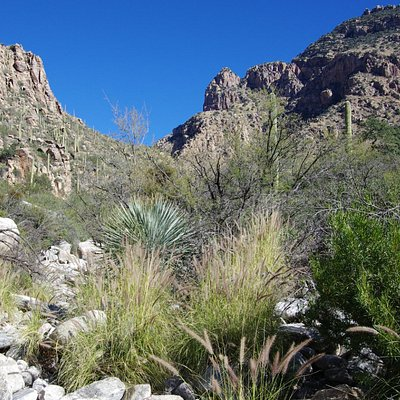 View up the canyon