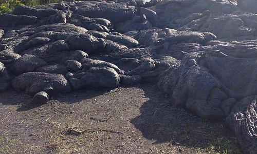 Pahoehoe lava crosses the road