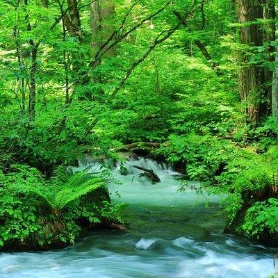 Oirase-Keiryu(a mountain stream)