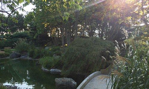 vue jardin japonais 4