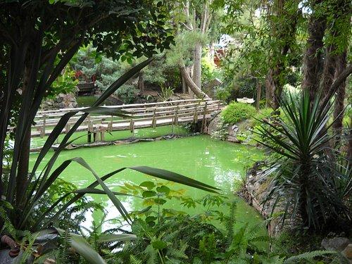 puentes sobre lagos artificiales con carpas