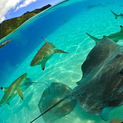 Up close & personal with stingrays