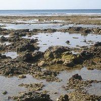 退潮時海岸線很長