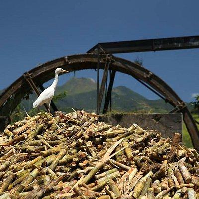 Distillerie Bologne vue sur la Soufrière