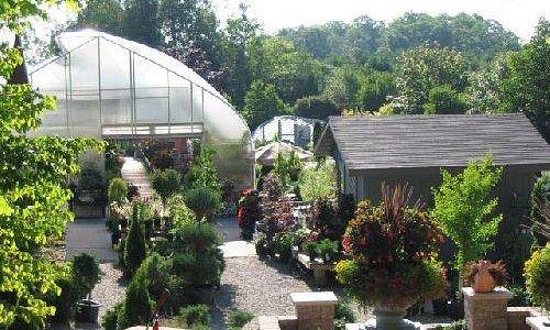 Wide Array of Unique Plants