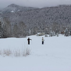 Cross Country Skiing on the Golf Course, Fernie, BC.