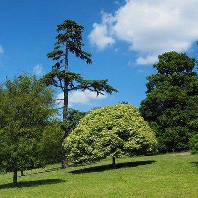 Marks Hall Gardens and Arboretum