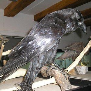wystawa ptaków