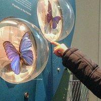 Les papillons à la Galerie des Enfants