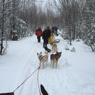 en promenade en traineau a chiens