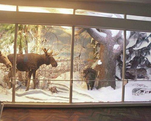 Экспонат о природе Мордовии