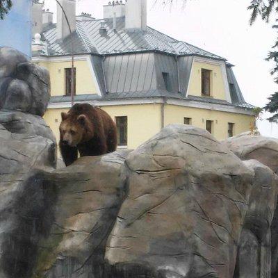Niedźwiedź na tle głównego budynku